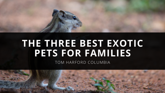 The Three Best Exotic Pets for Families, With Advice From Renowned Pet Expert Tom Harford Columbia