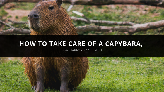 How to Take Care of a Capybara, With Insight From Pet Expert Tom Harford Columbia