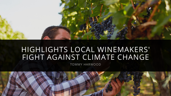 Tommy Harwood Highlights Local Winemakers' Fight Against Climate Change