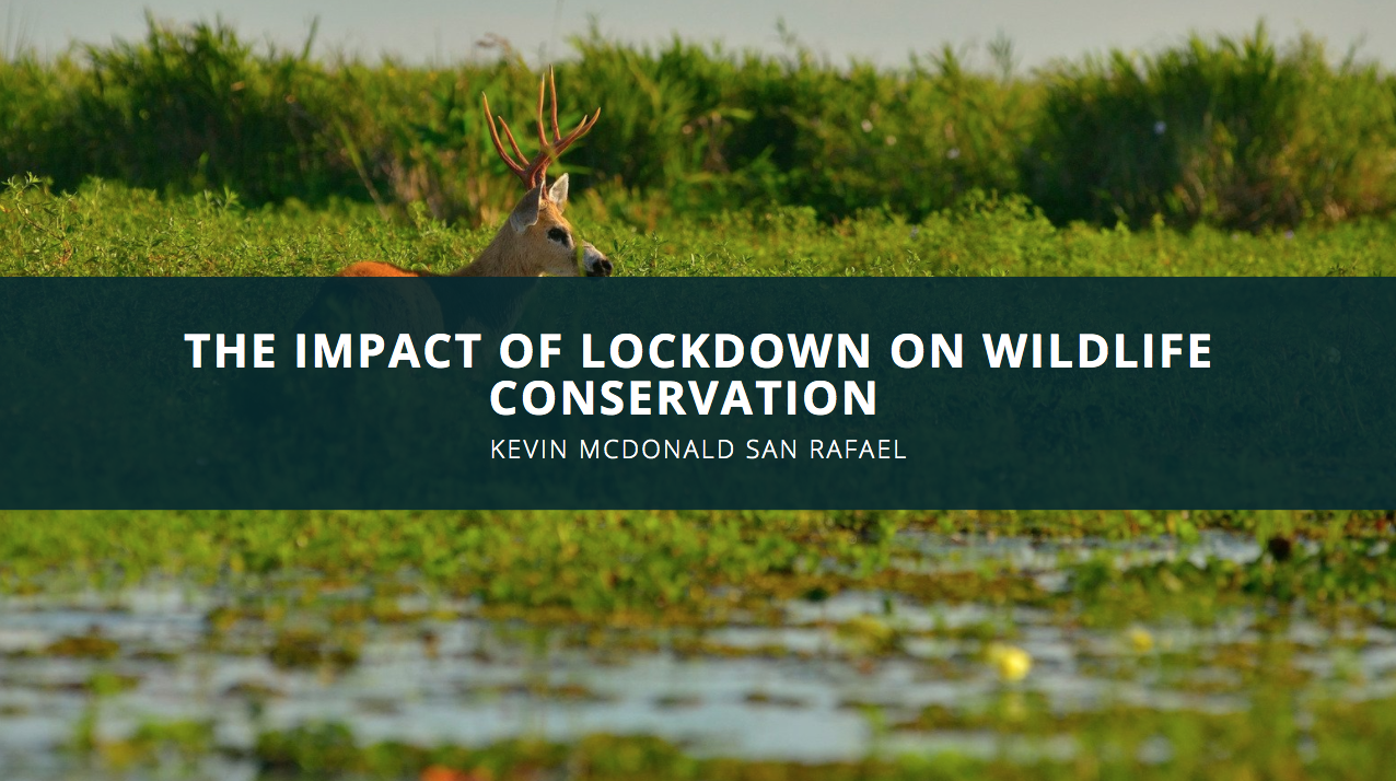 Kevin McDonald Explains the Impact of LockDown on Wildlife Conservation